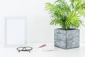 A plant pot with a houseplant in it and glasses on a desk
