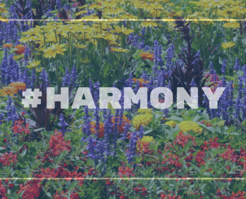 Image of a colourful flower bed with the word Harmony overlapping