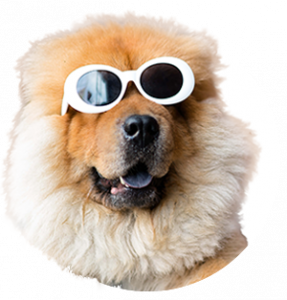 A large happy dog wearing white sunglasses